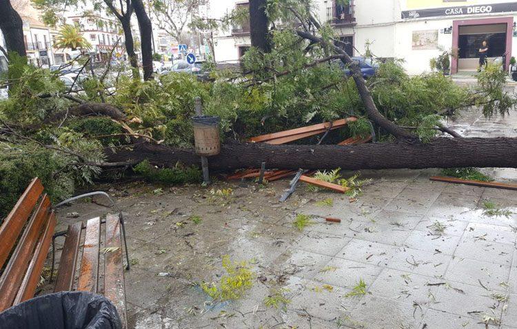 El temporal de viento deja en Utrera numerosos daños en árboles y mobiliario, y a miles de personas sin luz, agua ni teléfono (IMÁGENES)