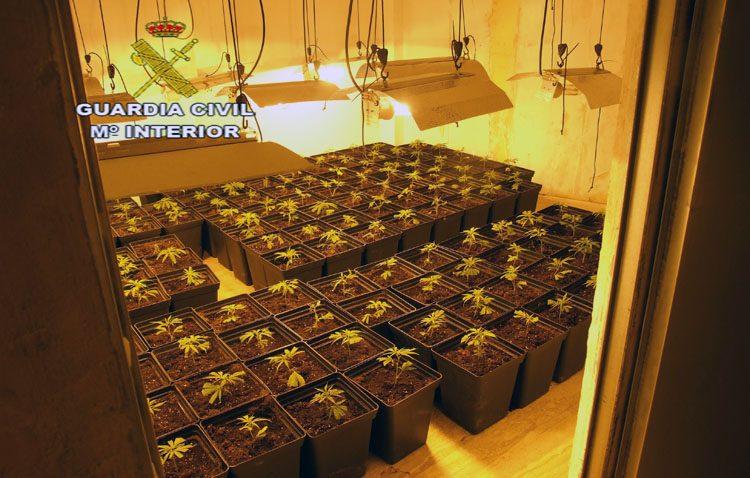 Detenidos por el cultivo de 144 plantas de marihuana en una vivienda de Utrera con un enganche ilegal a la luz