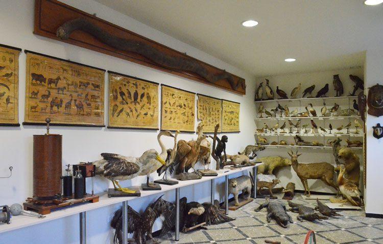 El colegio salesiano de Utrera recupera su prestigioso e histórico museo de ciencias naturales