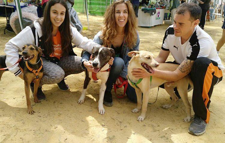 La asociación animalista «Arca de Noé Sevilla» busca voluntarios al trasladar su refugio a Utrera