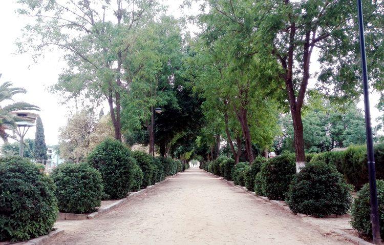 Una ordenanza municipal para gestionar y proteger el arbolado urbano de Utrera