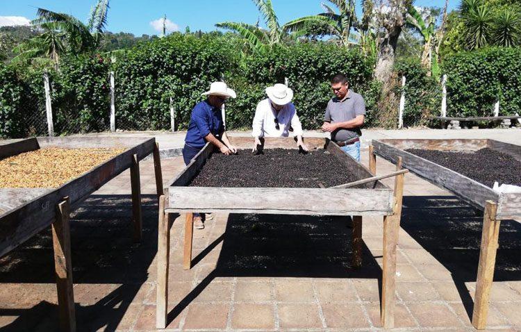 Un viaje a los mejores cafés del mundo de la mano de Cafés Macaibo