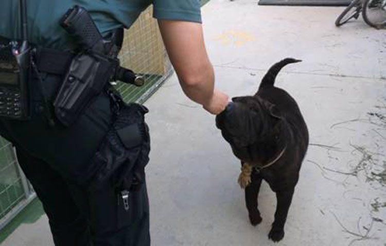 Investigan al dueño de un perro en Utrera al estar amarrado al sol, sin agua, con heridas y con síntomas de deshidratación