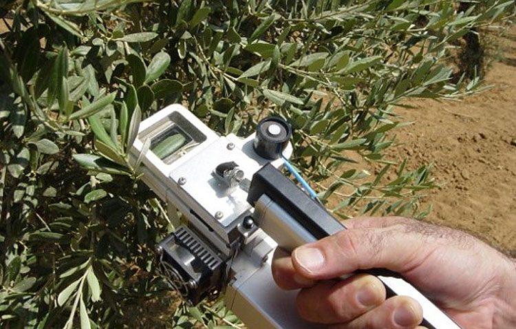 Un proyecto pionero detecta la necesidad de agua en olivos de Utrera para optimizar el uso de los recursos hídricos