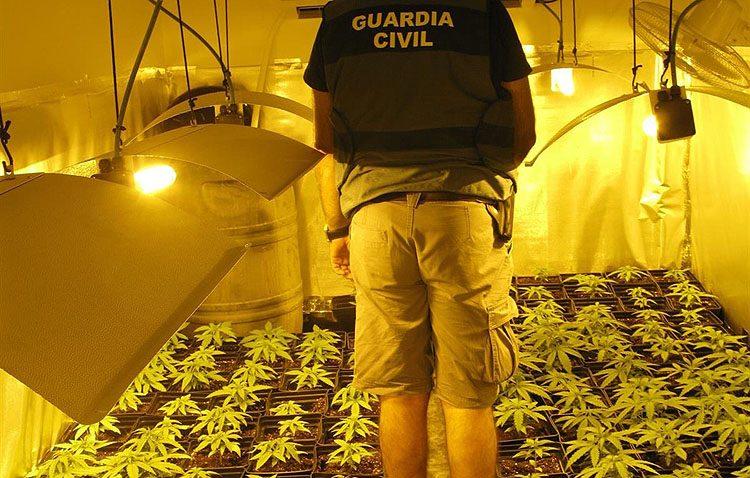 Dos detenidos por tener una plantación de marihuana en una vivienda de Utrera