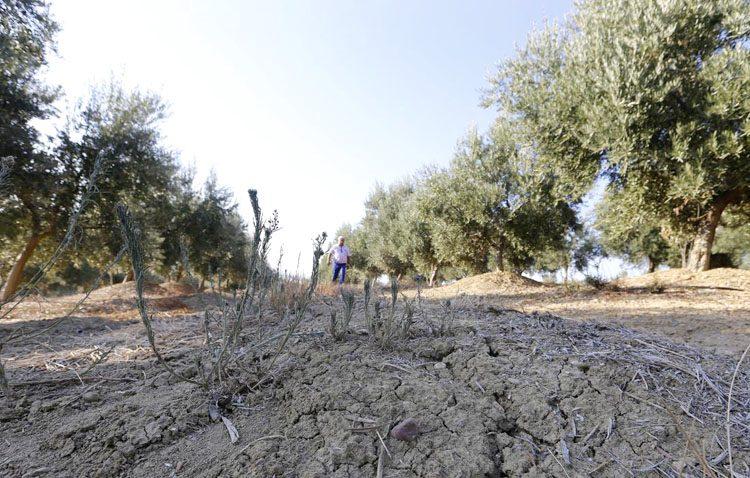La falta de lluvias preocupa en el campo utrerano