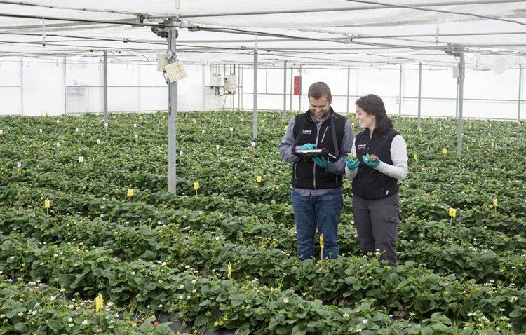 Utrera, sede española de experimentación de herbicidas para la multinacional Basf