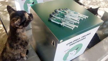 Medidas especiales para acabar con las colonias felinas y de palomas en Utrera