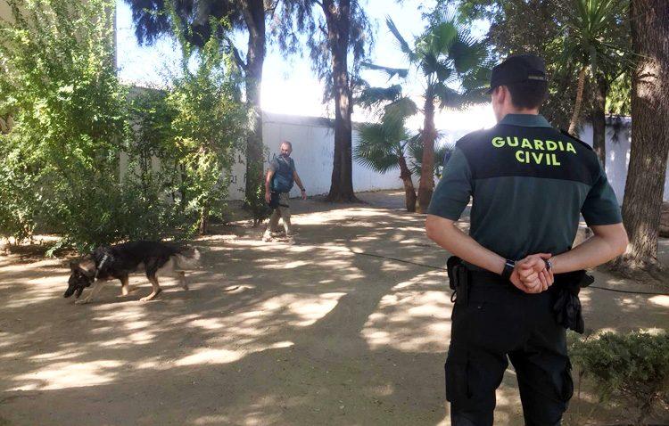 La investigación policial no encuentra pruebas que sustenten los envenenamientos caninos en Utrera