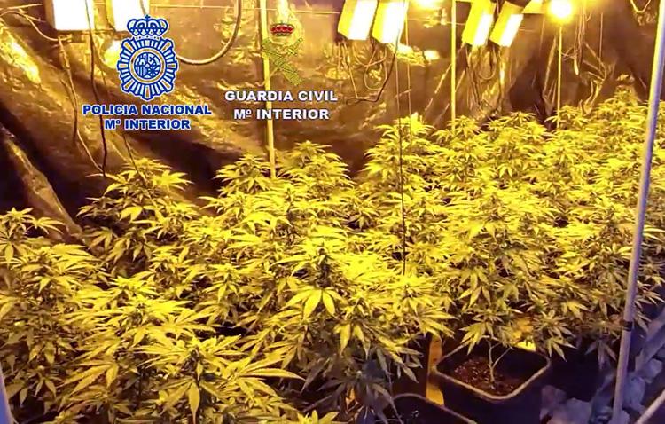 La Audiencia de Sevilla decidirá sobre el ingreso el prisión de los 23 detenidos por cultivo de marihuana en El Palmar de Troya
