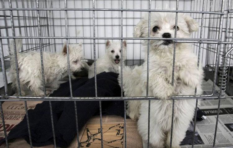 Una campaña municipal apuesta en Utrera por la adopción de animales en Navidad