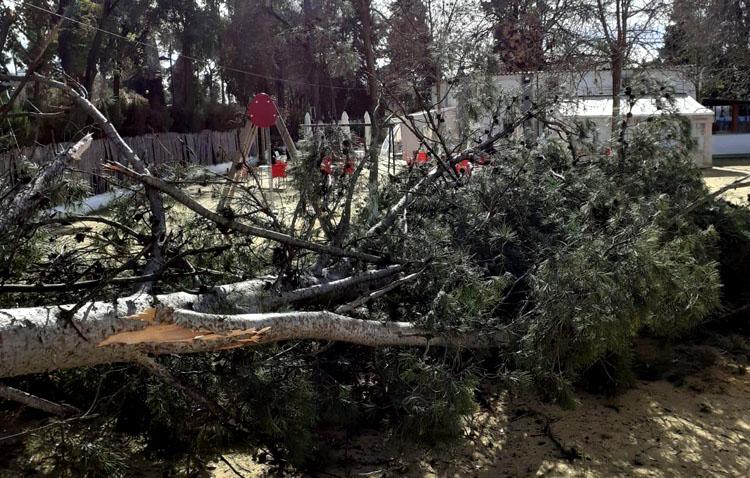 El viento se deja sentir en Utrera y lleva al cierre de los parques de la ciudad