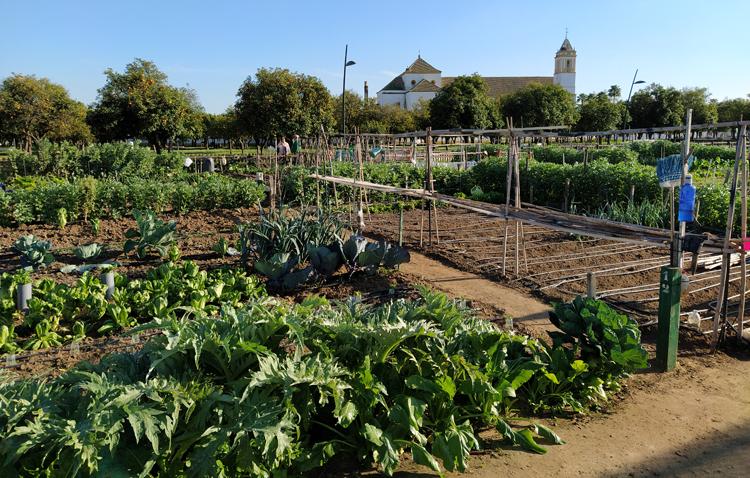 Los huertos sociales del parque del V Centenario vuelven a la actividad este lunes