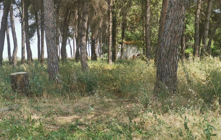 Podemos denuncia «la suciedad y el abandono» del parque de la pedanía utrerana de Trajano durante la crisis del coronavirus