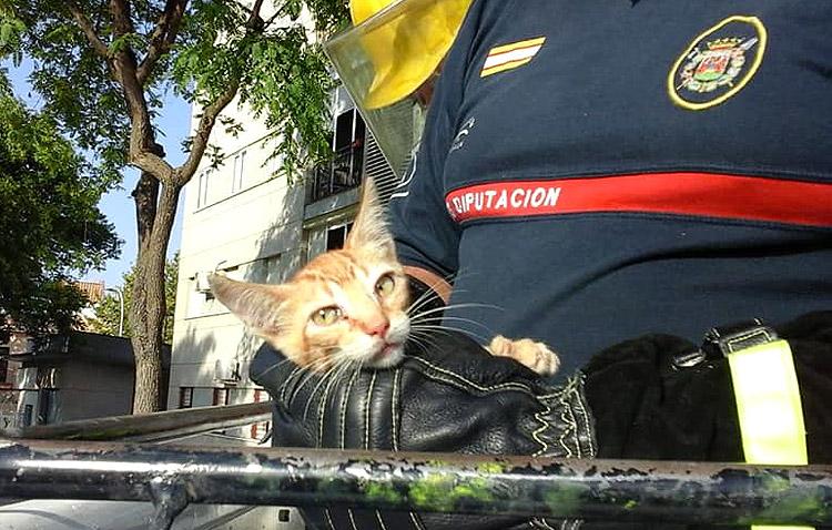 La historia con doble final feliz de un pequeño gato atrapado en la copa de un árbol