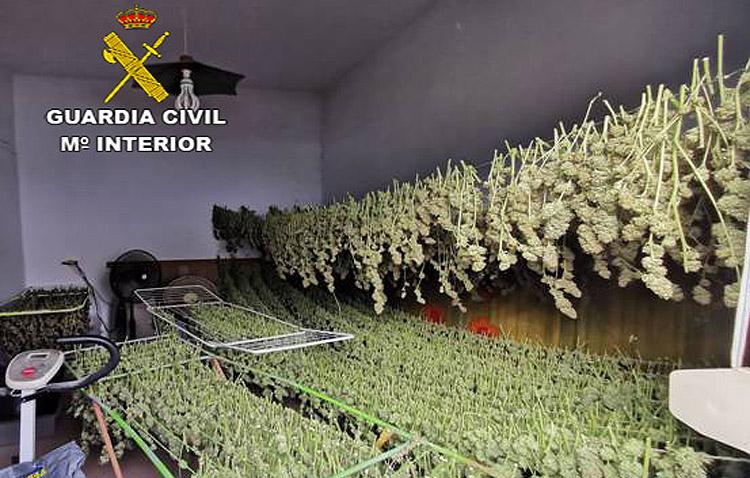 Cuatro detenidos en una importante operación de la Guardia Civil de Utrera contra el cultivo de marihuana