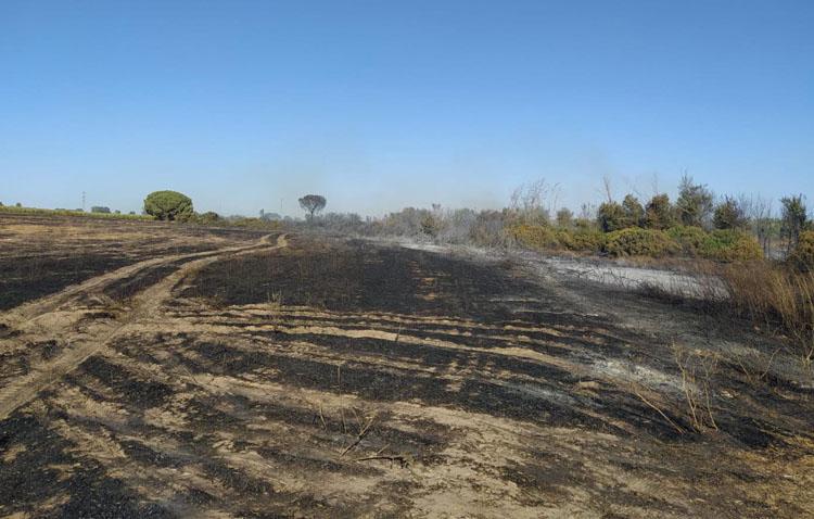 Un incendio en Don Rodrigo moviliza un amplio dispositivo de extinción y obliga a desalojar a varias personas