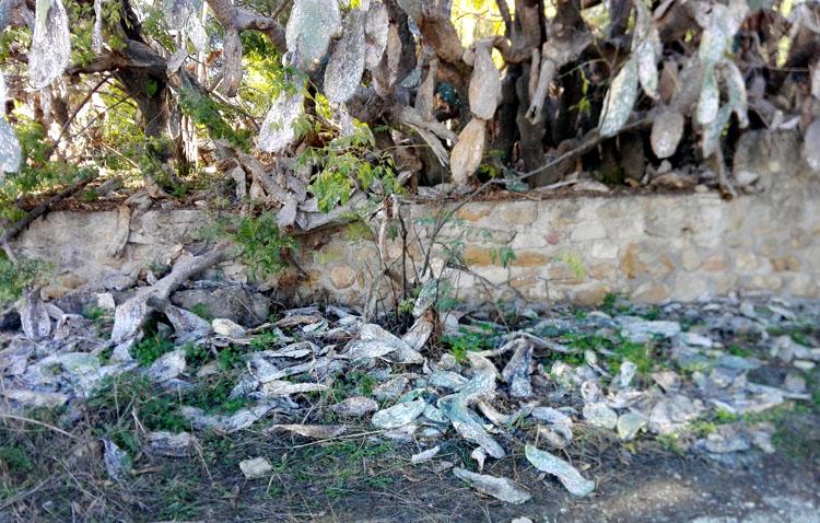Las chumberas, un trozo del paisaje utrerano que desaparece