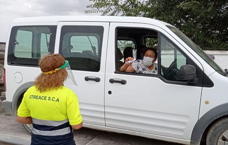 La sequía y la pandemia marcan la campaña del verdeo en Utrera, que espera recoger 10 millones de kilos de aceituna gordal