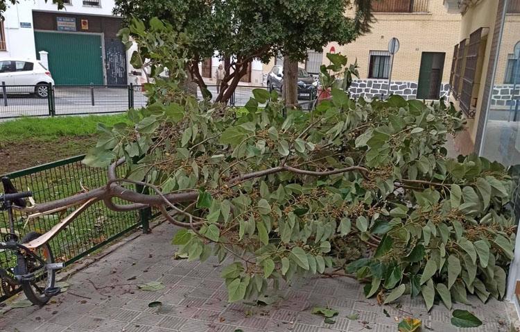 Una quincena de intervenciones en Utrera como consecuencia del viento