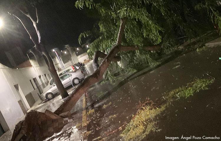El temporal de viento complica la noche a los servicios de emergencia de Utrera tras la quincena de actuaciones durante la tarde (GALERÍA)