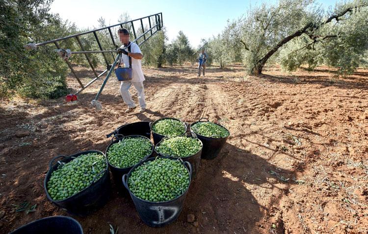La campaña de verdeo llega a su fin «sin apenas incidencia» de la COVID-19