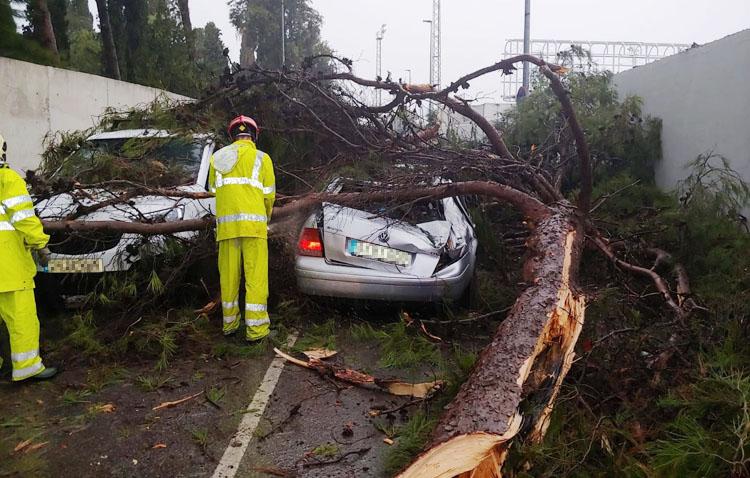Un pino se desploma sobre dos vehículos cuando circulaban por una calle de Utrera