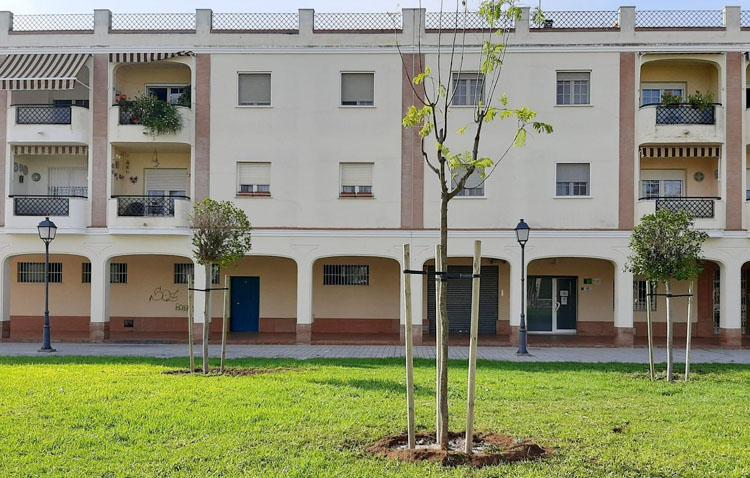 El Ayuntamiento inicia la plantación de más de 300 árboles en Utrera