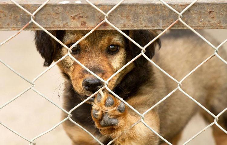 Una campaña municipal apuesta en Utrera por la adopción de animales en Navidad frente a la compra