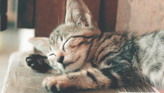 Cómo hacer feliz a tu gato