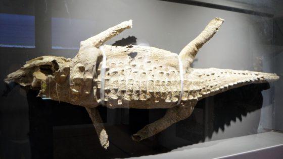 La leyenda del lagarto de Consolación, un regalo único a la Virgen