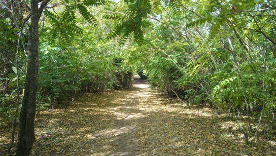 Un paraíso natural muy cerca del corazón histórico de Utrera