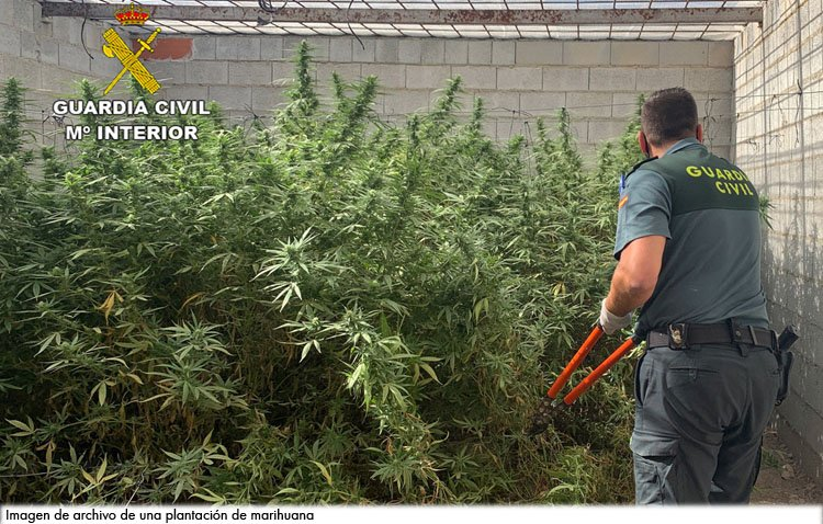 Condenados a un año y nueve meses de prisión por tener una plantación de 101 kilos de marihuana en Utrera