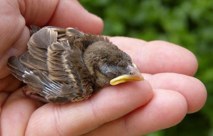 Podemos pide «nuevos protocolos» en las podas de los árboles en Utrera «para proteger a las aves en época de cría»