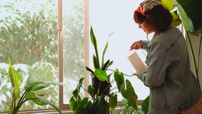 Regar plantas en vacaciones: trucos e inventos