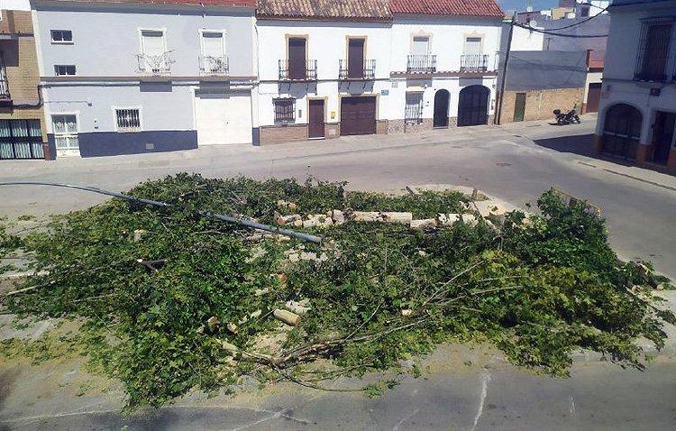 Podemos denuncia la «tala de árboles» en la barriada Las Torres