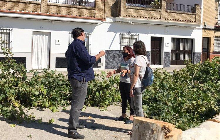 Los árboles de la barriada Las Torres se sustituirán por otras especies ante los «problemas de salud» de los vecinos