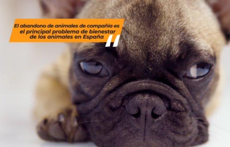 El Ayuntamiento de Utrera pone en marcha una campaña para prevenir el abandono de los animales de compañía