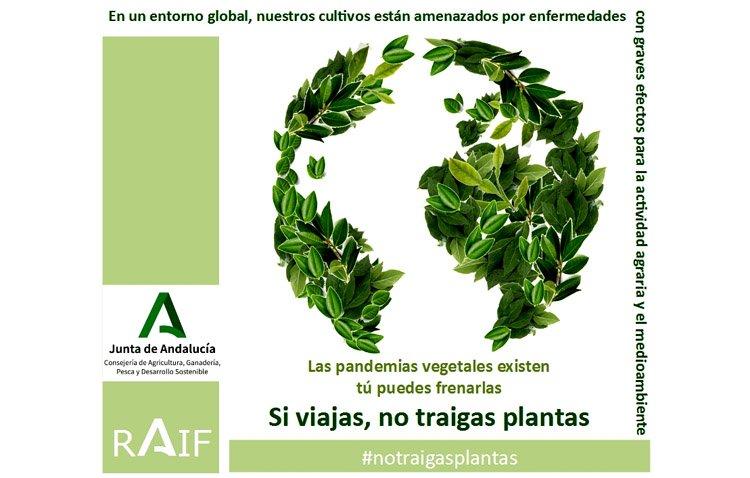 La Junta pide colaboración a los ciudadanos para evitar plagas por traer plantas de otros países durante las vacaciones