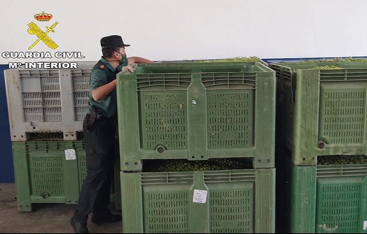 La Guardia Civil pone en marcha un dispositivo para la prevención y control de los hurtos y robos de aceitunas