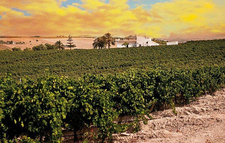 Sevilla: El vino que trajo Baco